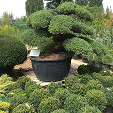 Exkluzív kert referencia kép